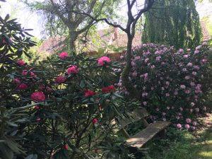 Forstbotanischer Garten, Hann. Münden