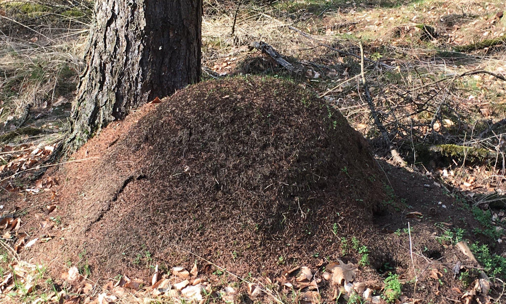 Ant colony, Hann. Münden