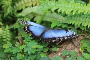 Schmetterlingspark, Uslar