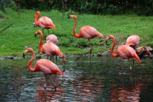 Weltvogelpark, Walsrode