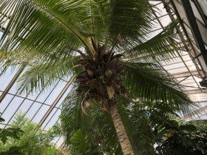 Gewächshaus für tropische Nutzpflanzen, Witzenhausen