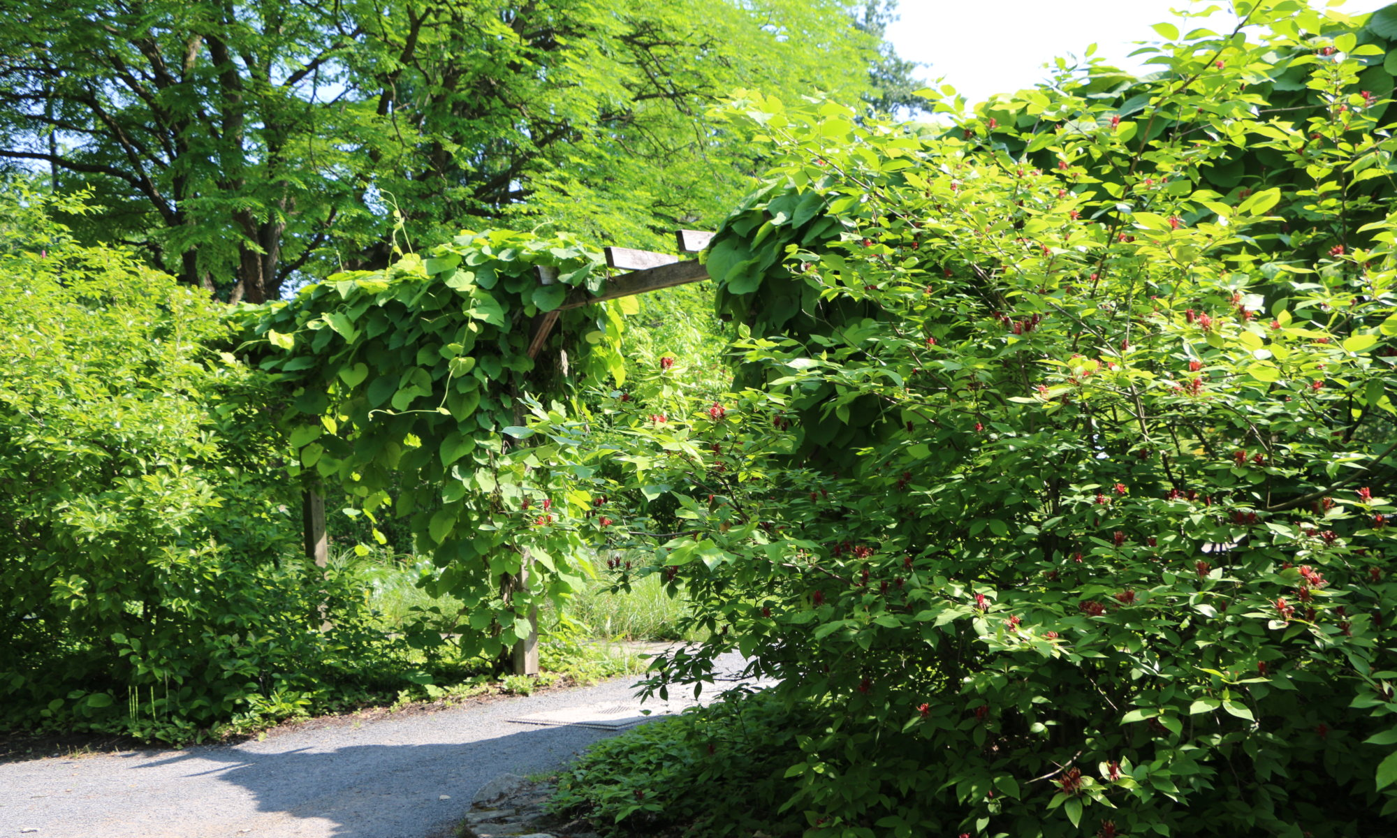 Alter Botanischer Garten, Göttingen