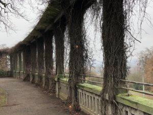 Weinberg, Kassel