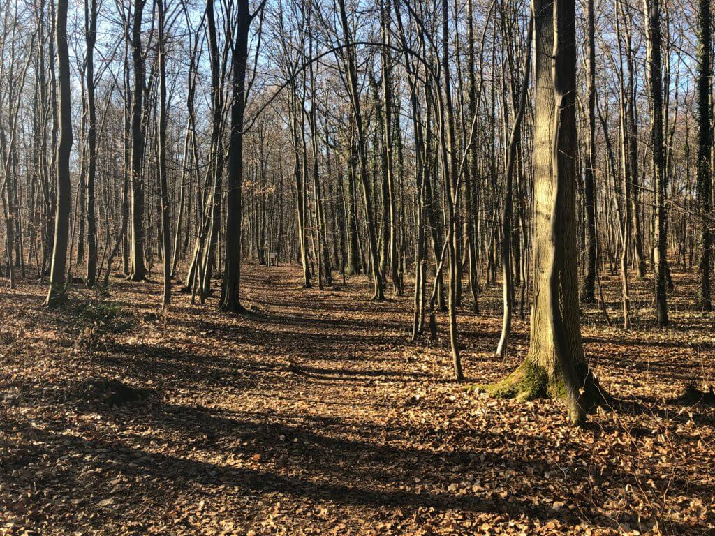 Walderlebnispfad Hessenschanze, Kassel