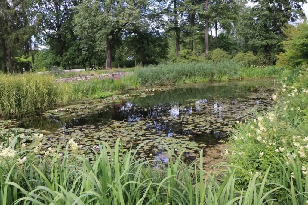 Botanical garden, Rīga