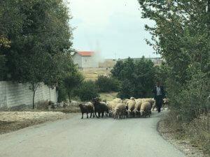 Blocked road, Përçevë